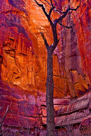 Zions Crimson Cliffs by photosbyflood