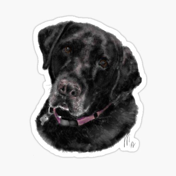 Sweet Old Black Labrador Retriever Sticker