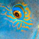 Blue Grouper Eye by Melissa Fiene