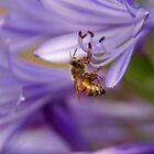 Yellow jacket Purple flower by Kirstyshots
