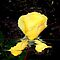 ALTERED IMAGE OF A YELLOW ROSE WITH WATER EFFECT