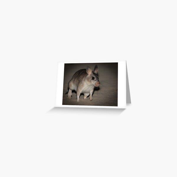 Giant rat of Madagascar Greeting Card