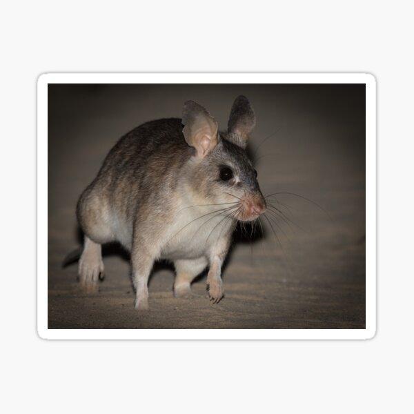 Giant rat of Madagascar Sticker