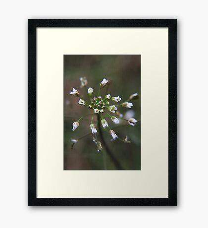Strange wild flower Framed Print