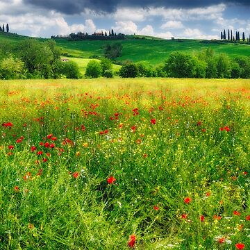 Tuscan Spring Meadow I by ozeg