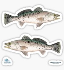 """""""Spotted Seatrout"""" by Amber Marine ~ watercolor fish art, © 2013 Sticker"""