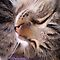 CAT PORTRAITS - MEMBERS ONLY JAN $V