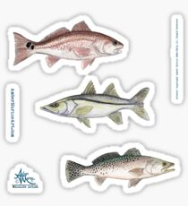 """""""Inshore Slam""""  by Amber Marine ~ watercolor redfish, snook, and trout art, © 2013 Sticker"""