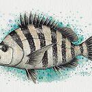 """""""Sheepshead Splash"""" by Amber Marine, watercolor fish art, © 2016 by Amber Marine ~ Wildlife Artist ~ © 2004-2019"""