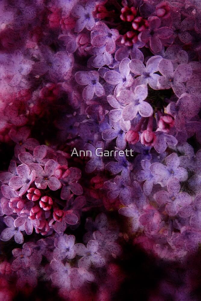 Lovely Lilacs by Ann Garrett
