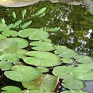 Lillypad Reflections by DesignsByDeb