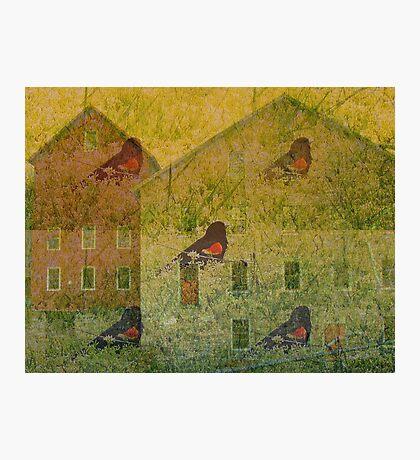 Redwing                        Photographic Print