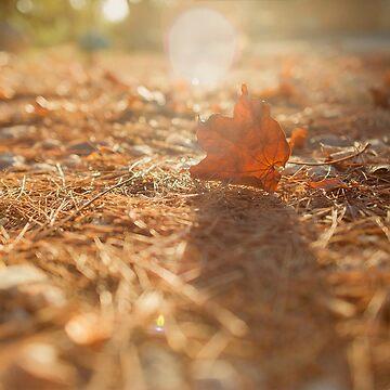 Autumnal sunset by NoeliaUroz