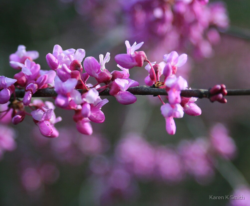 Red Bud by Karen K Smith