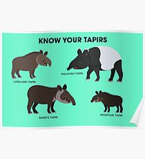 Know Your Tapirs Poster