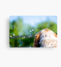 Orange and White Italian Spinone Dog Thoughts Metal Print