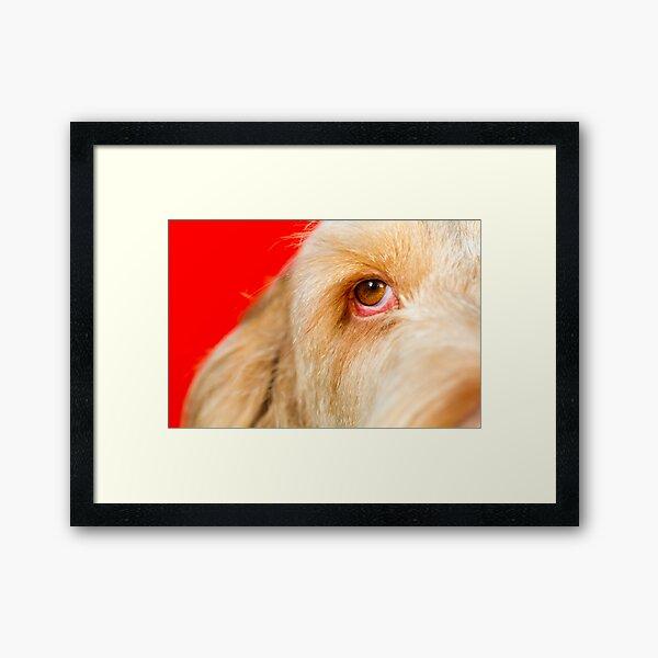Eye Spy Spinone Framed Art Print