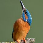 Kingfisher  by Peter Wiggerman