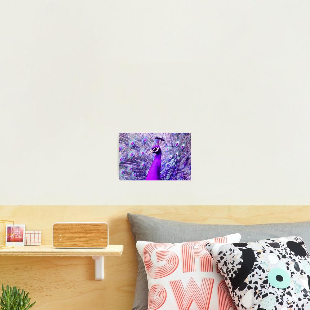 Purple Peacock Photographic Print