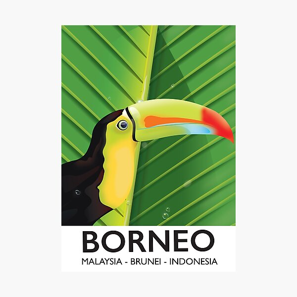 Borneo Toucan travel poster Photographic Print