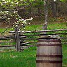 Water Barrel - Blooming Dogwood by KSkinner