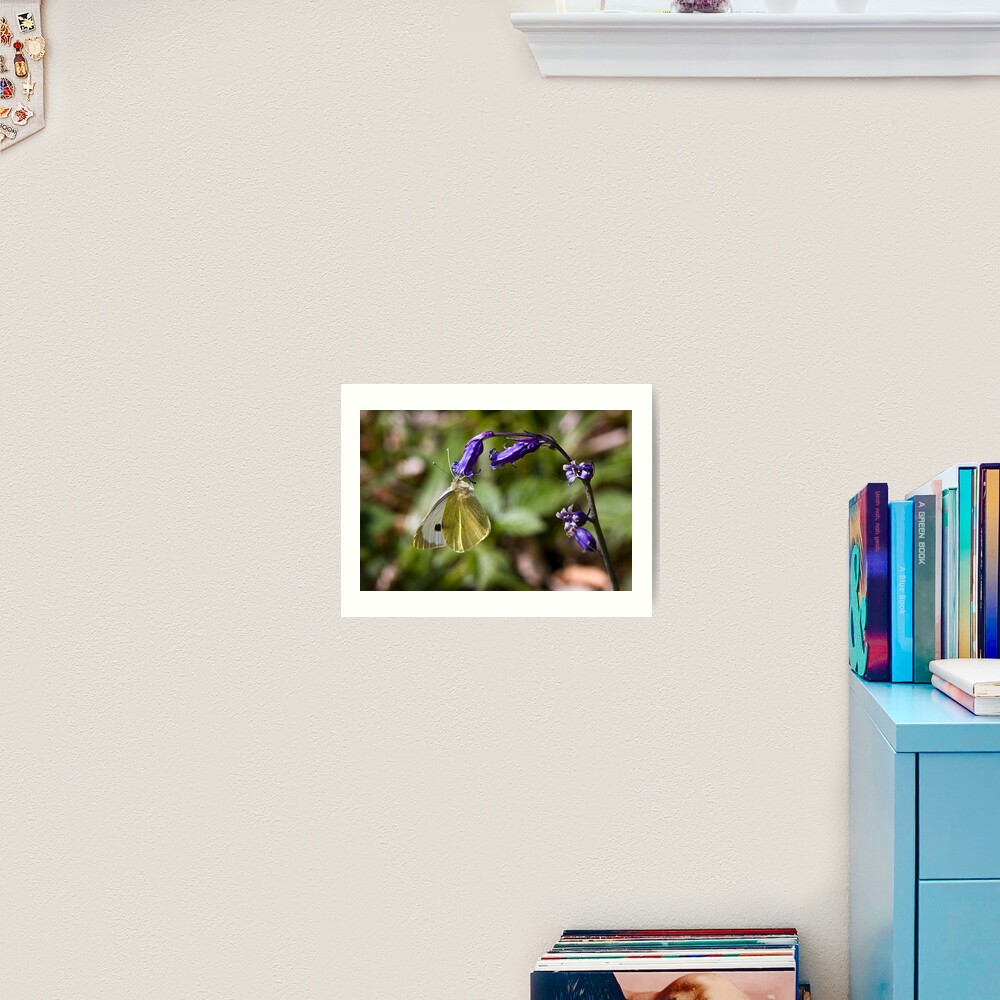 Large White Butterfly (Pieris brassicae) on Bluebell Art Print