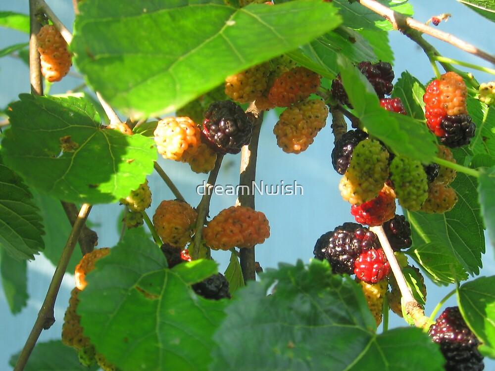 Backyard Wild Berries (1) by dreamNwish