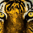 Tiger Eyes by lsmith77