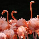 pink flamingos by supergold