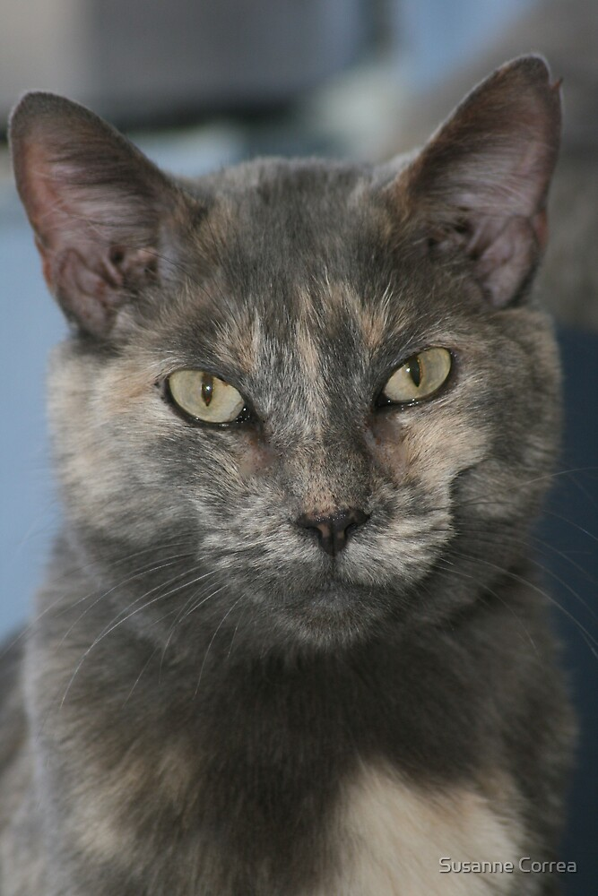 Kitty Kat by Susanne Correa