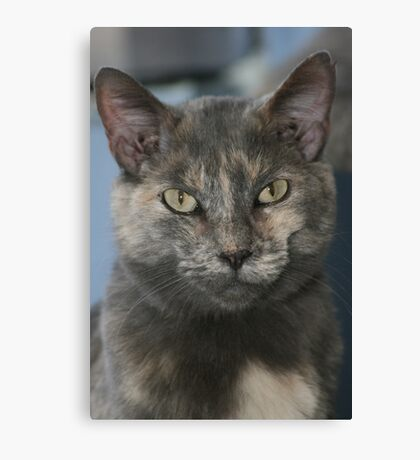 Kitty Kat Canvas Print