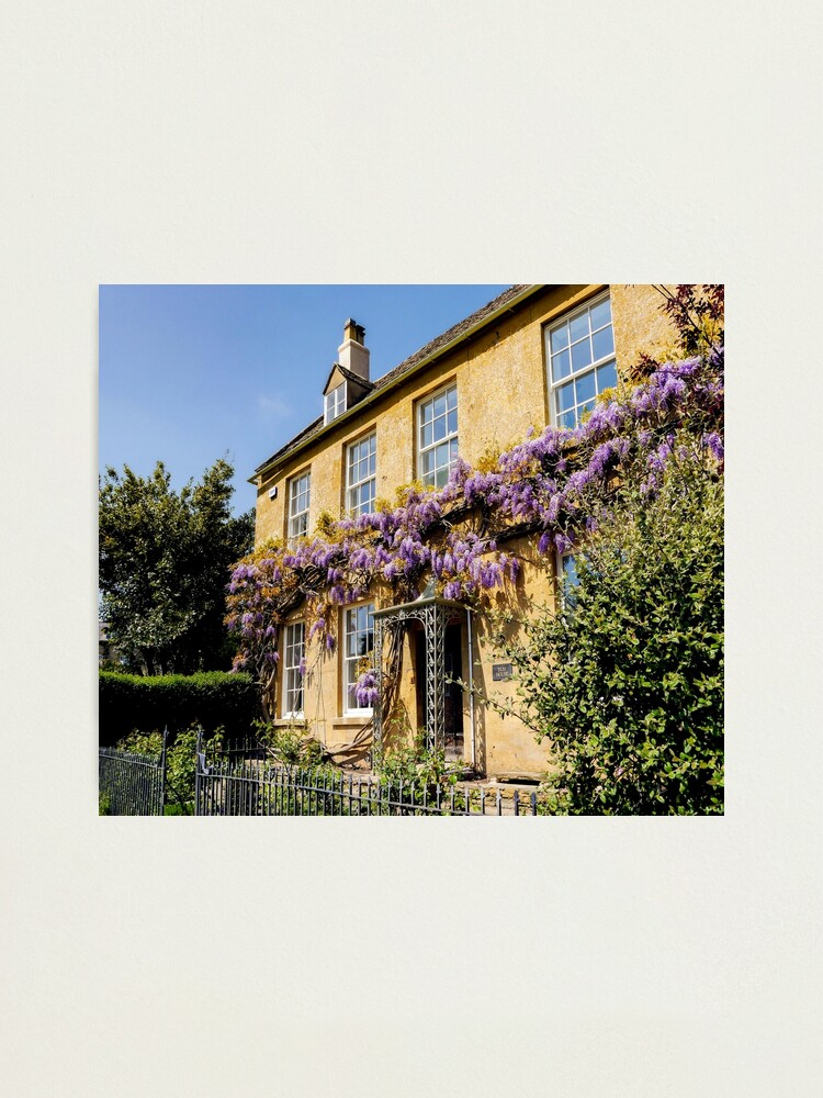 Alternate view of Wisteria  Photographic Print