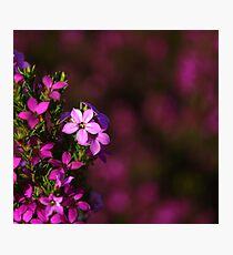 Colour Photographic Print