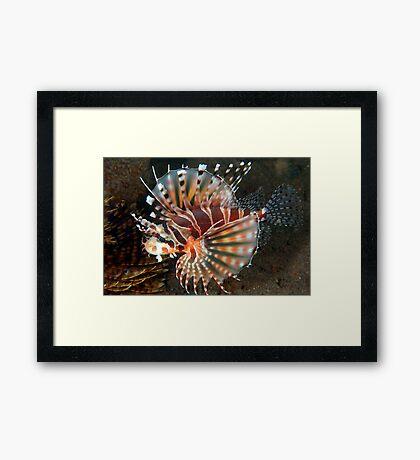 Lion Flair Framed Print
