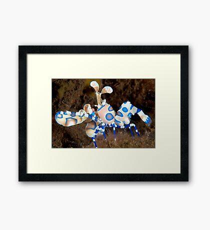 Harlequin March Framed Print