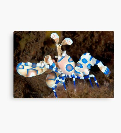Harlequin March Canvas Print
