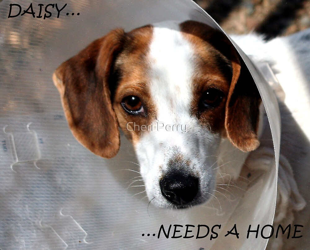 Daisy Needs A Home by Cheri Perry