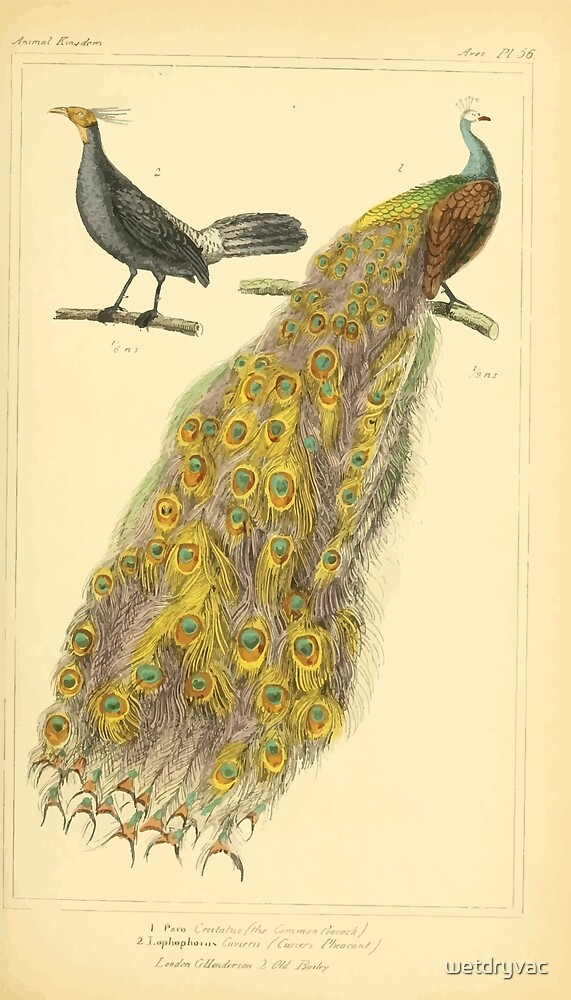The Animal Kingdom by Georges Cuvier, PA Latreille, and Henry McMurtrie 1834 601 - Avies, Birds by wetdryvac
