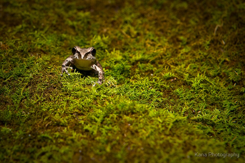 Frog on Moss by Kana Photography