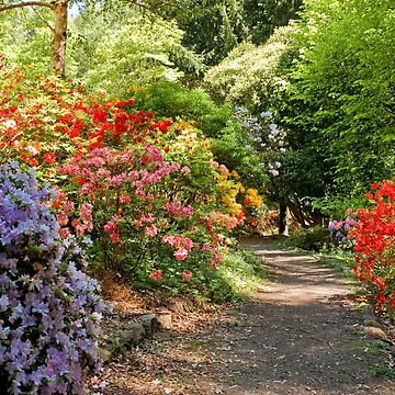 0964 National Rhododendron Gardens by DavidsArt