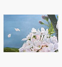 Delicate Sprinkles of Delight Photographic Print