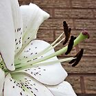 White Lily. by Forfarlass