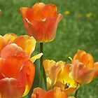 Tulips Of Fire by James Brotherton