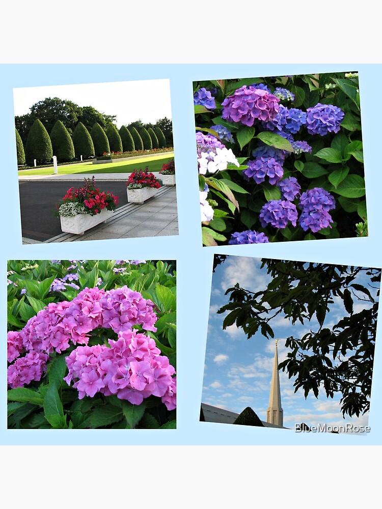 Hoher Sommer an der Preston-Tempel-Collage von BlueMoonRose