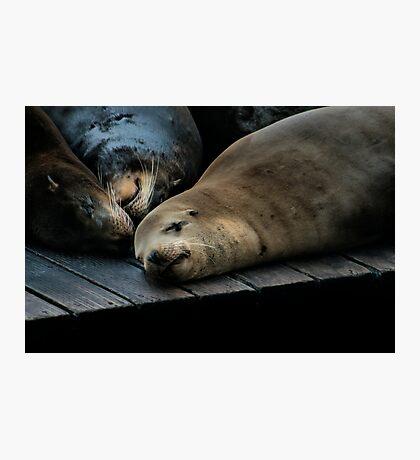 Sea Lions Photographic Print