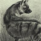 From the Earth: Alert (Aardwolf) by NoelleMBrooks
