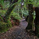Liffey Falls Track by Peter Daalder