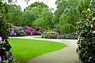 Rhododendron Pathway by DonDavisUK