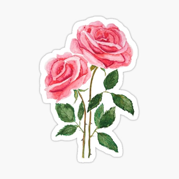 2 pink roses watercolor  Sticker