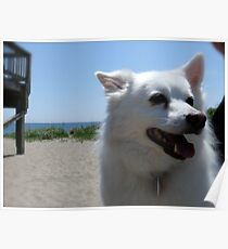 Beach Run! Poster
